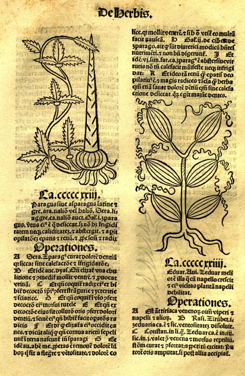 1491-asparagus1.jpg