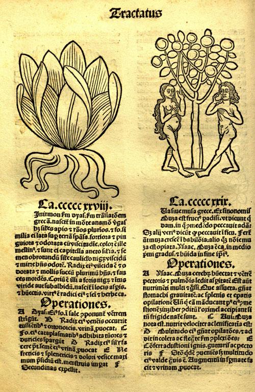 1491-banana1.jpg
