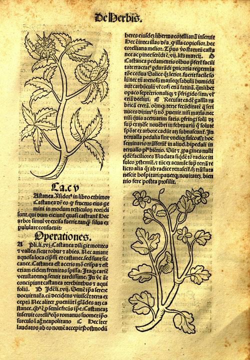 1491-chestnut1.jpg