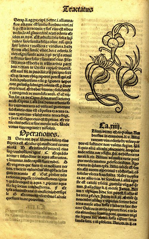 1491-garlic1.jpg