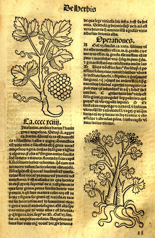 1491-grape21.jpg