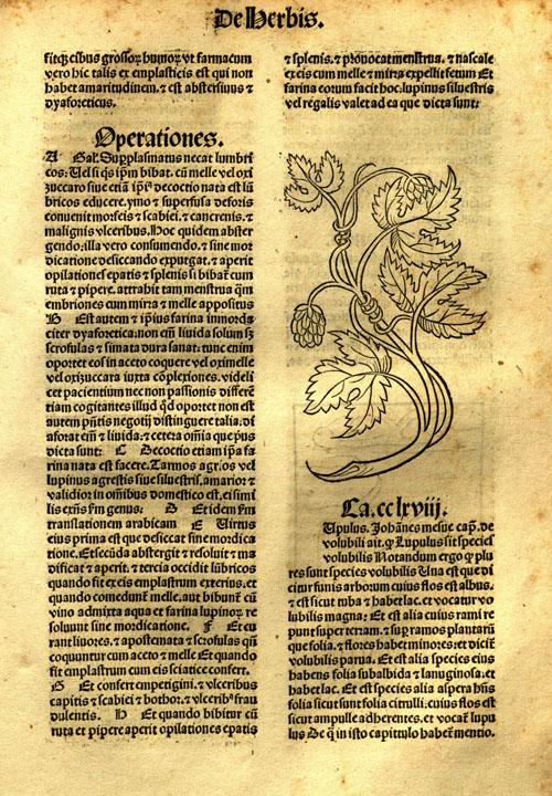 1491-hops1.jpg