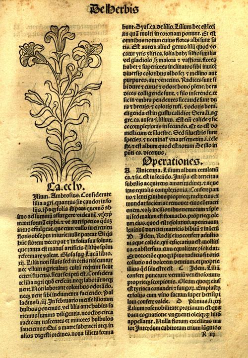 1491-lily1.jpg