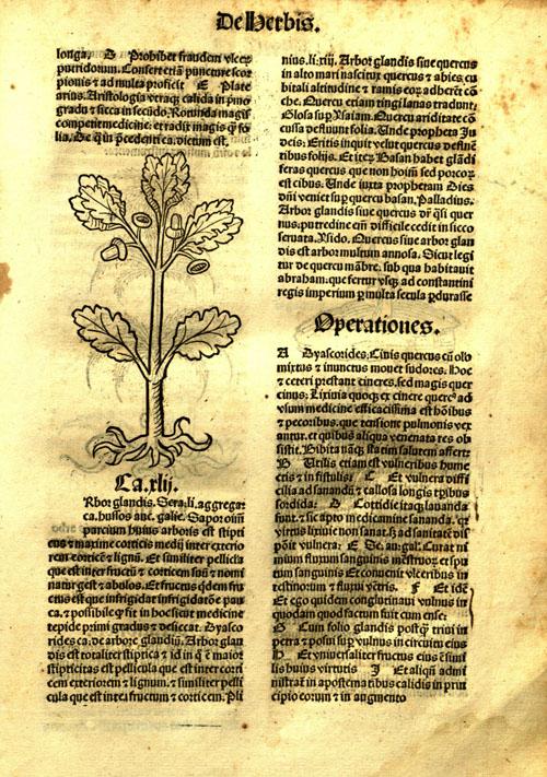 1491-oak1.jpg