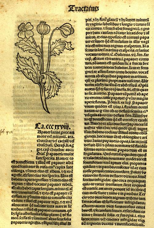 1491-poppy21.jpg