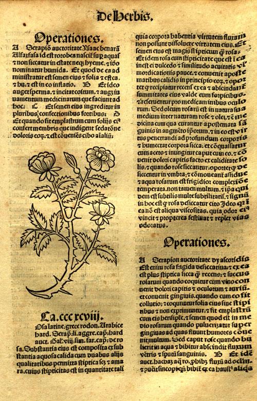 1491-rose1.jpg