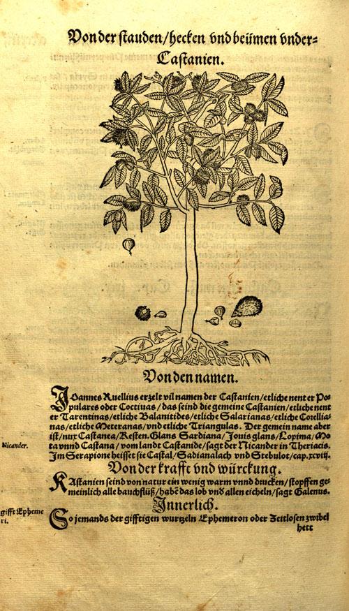Bock-chestnut1.jpg