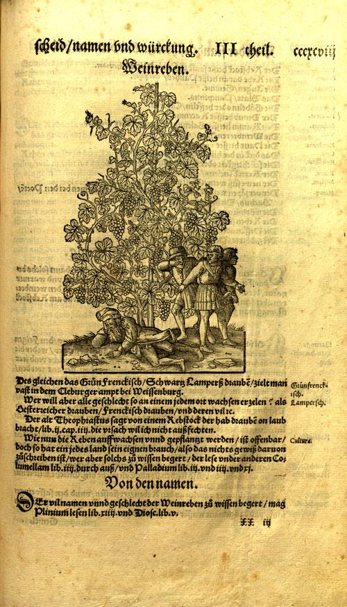 Bock-grapes1.jpg