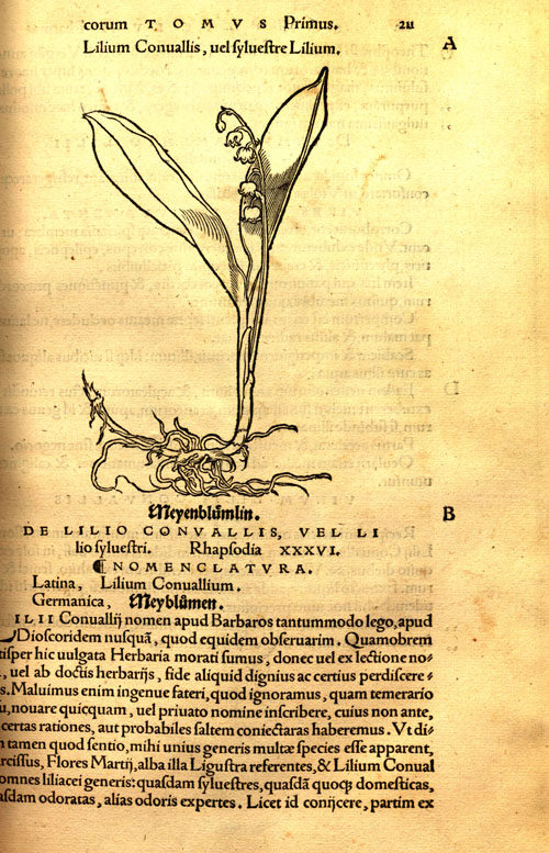 Brunfels(1530)-lilyvalley.jpg