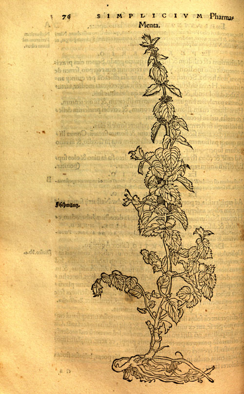 Brunfels(1530)-mint.jpg