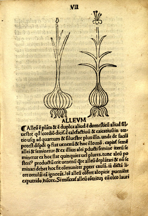 Incipit%20tractatus%20(1502)-garlic.jpg