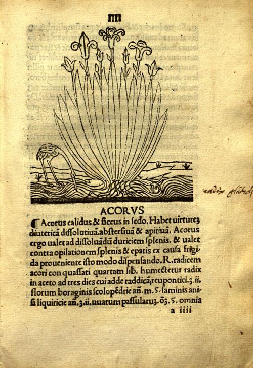 Incipit%20tractatus%20(1502)-iris1.jpg