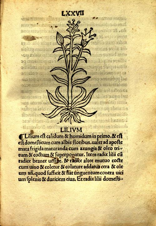 Incipit%20tractatus%20(1502)-lily.jpg
