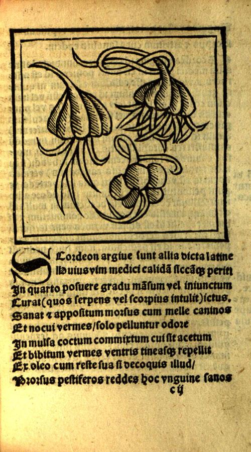 Macer1522-garlic1.jpg