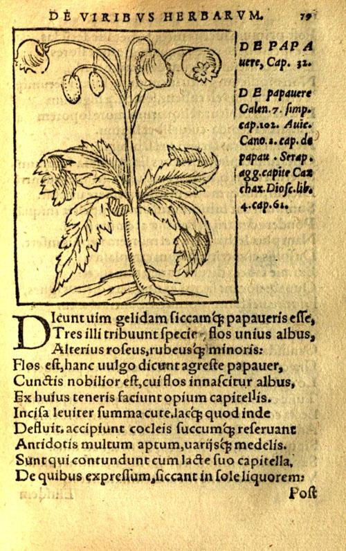 Macer1559-poppy1.jpg